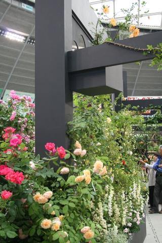 つるバラの風景2