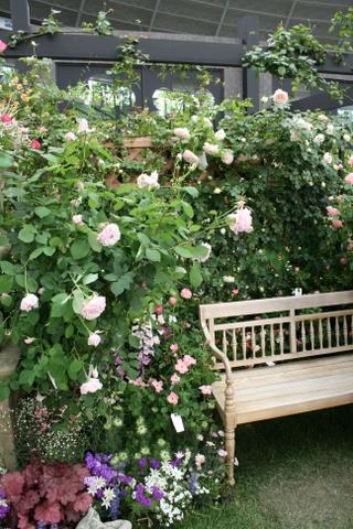 つるバラの風景1