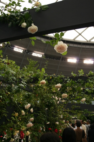 つるバラの風景4