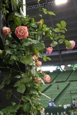 つるバラの風景5