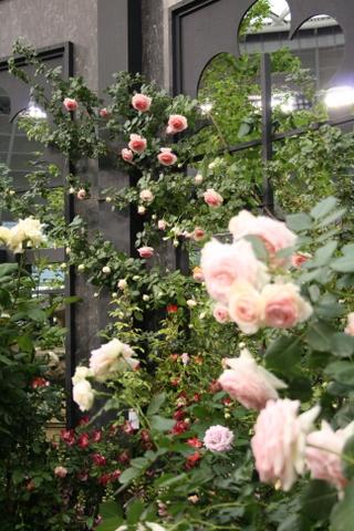 つるバラの風景7