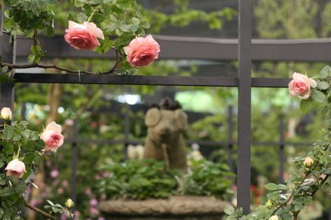 つるバラの風景8