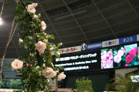 国際バラとガーデニングショウ3