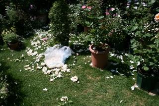 新雪の花がら摘み2