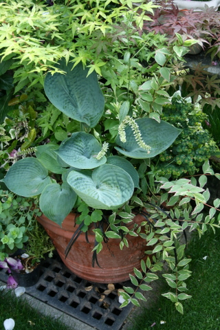 大型テラコッタの寄せ植え1