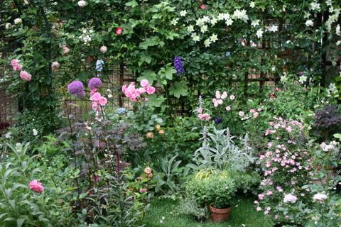 バラ花壇1