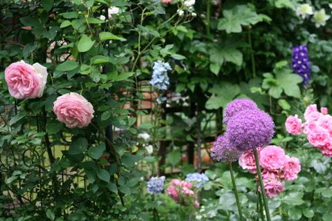 バラ花壇3