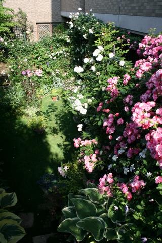 朝日の当たる庭