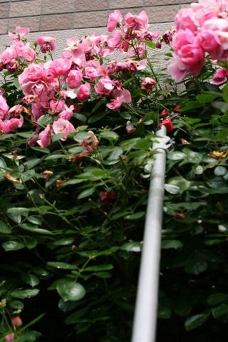 アンジェラの花がら切り