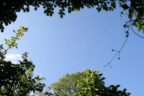 今日も夏空