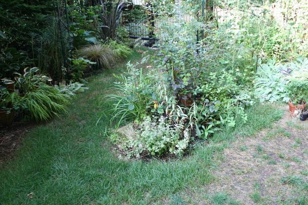 今日の庭1