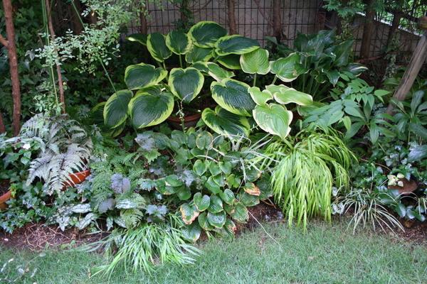 今日の庭2