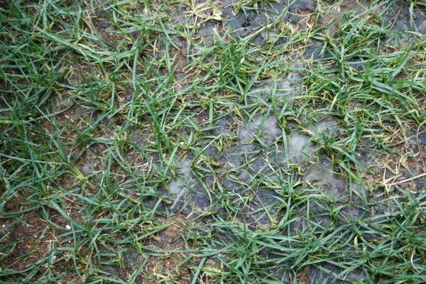 土壌表面の様子2