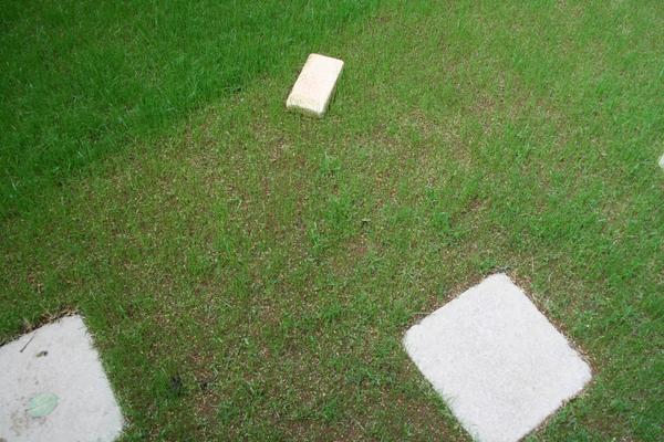 11日目の芝(上から)