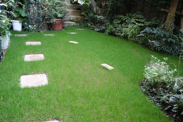 今日の芝庭(種まきから18?12日)