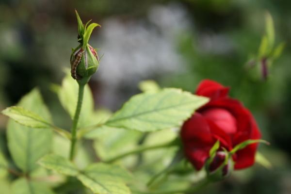 黒蝶の害虫