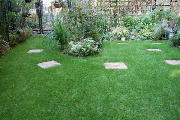 今朝の芝庭