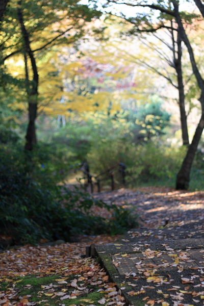 木立の中の散策路2