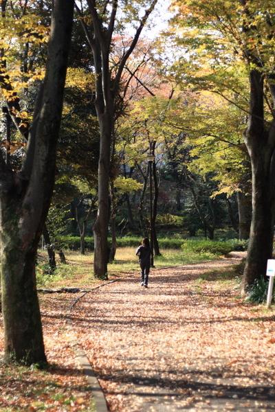落ち葉の中をジョギング