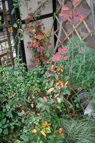 庭の紅葉その1