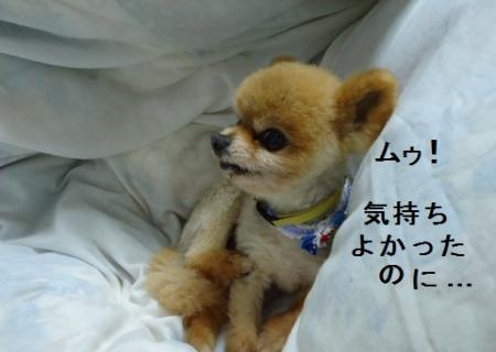 DSC01124_convert_20110501104912.jpg