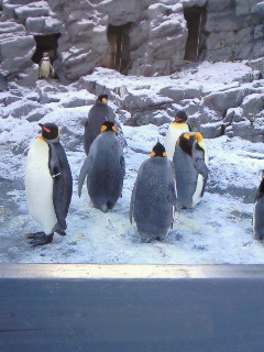 200911281315000ペンギン