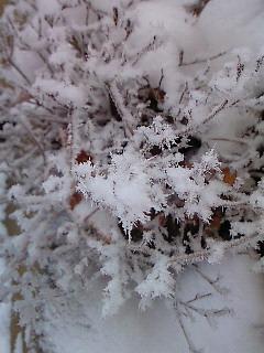 201001031111000雪の花