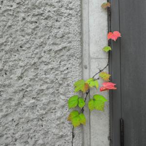 秋を感じて・・・