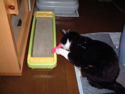 suzu20101212.jpg