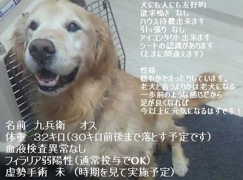 2010120516410002m.jpg