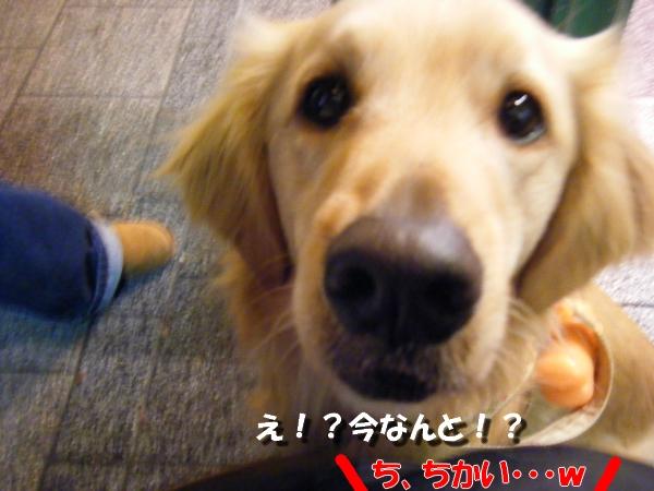 DSCF0107_20110207232502.jpg