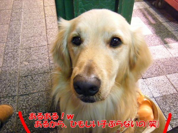 DSCF0110_20110207232501.jpg