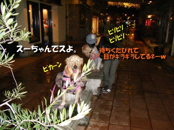 DSCF4060_20110110234926.jpg
