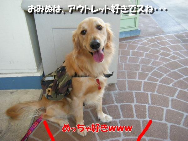 DSCF5044_20101203001926.jpg