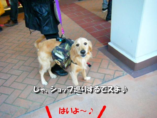 DSCF5047_20101203001925.jpg