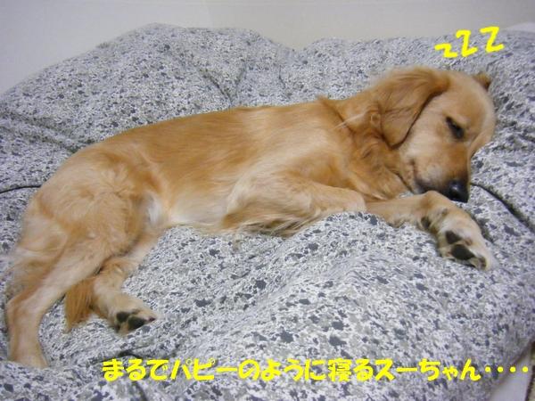 DSCF5080_20101206000139.jpg