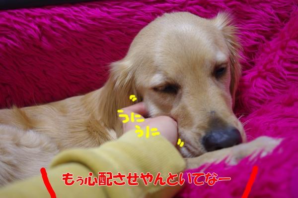 IMGP6448.jpg