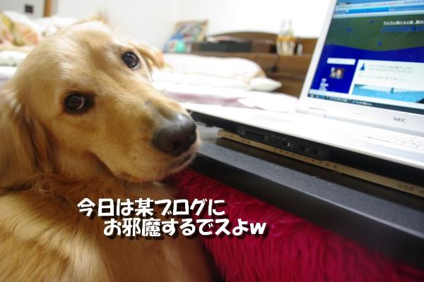 IMGP6600.jpg