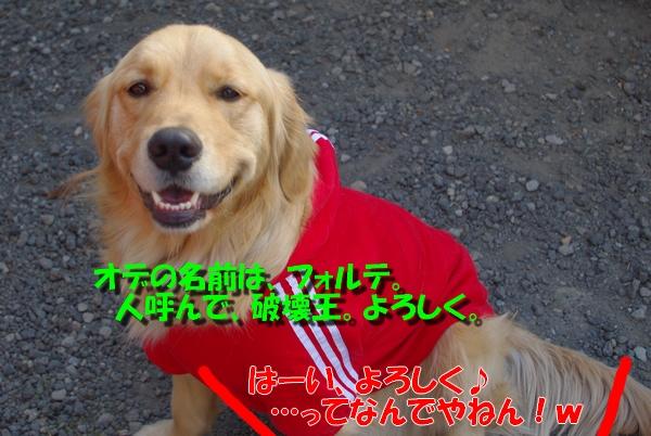 IMGP7074_20110121000613.jpg