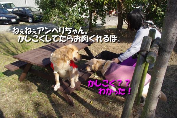 IMGP7177.jpg