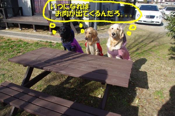 IMGP7195.jpg