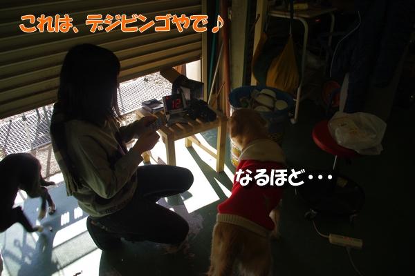 IMGP7246_20110124114645.jpg