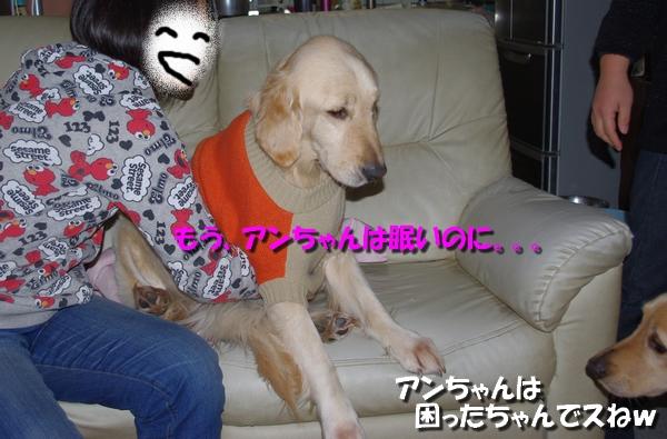 IMGP7384_20110125225723.jpg