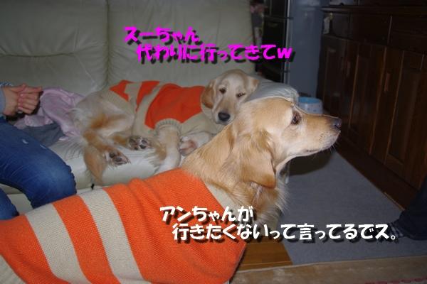 IMGP7388_20110125225723.jpg