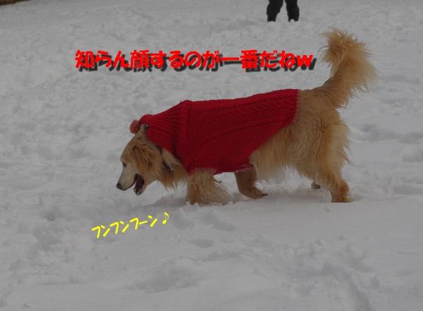 IMGP7498_20110129224811.jpg