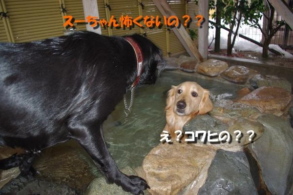 IMGP7732_20110131232340.jpg