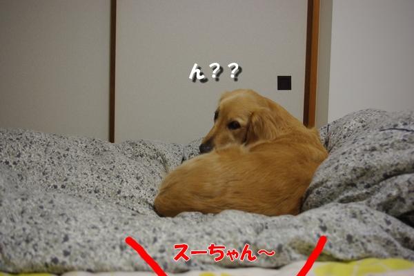 IMGP7794.jpg