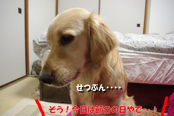 IMGP7804_20110203235725.jpg