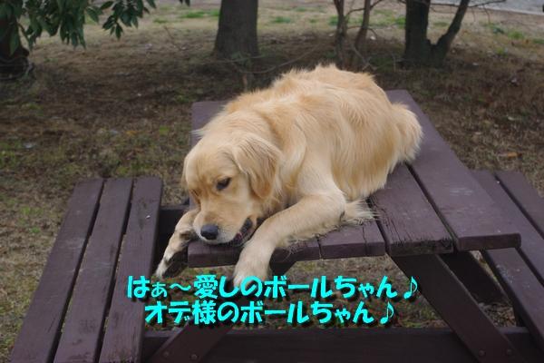 IMGP8008_20110220224509.jpg