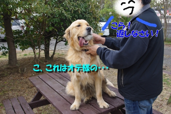 IMGP8019_20110220231251.jpg